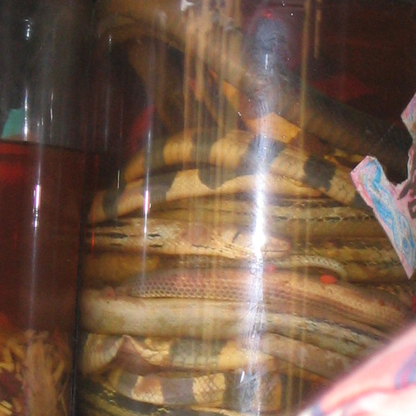 Snake Wine @ Hoi An