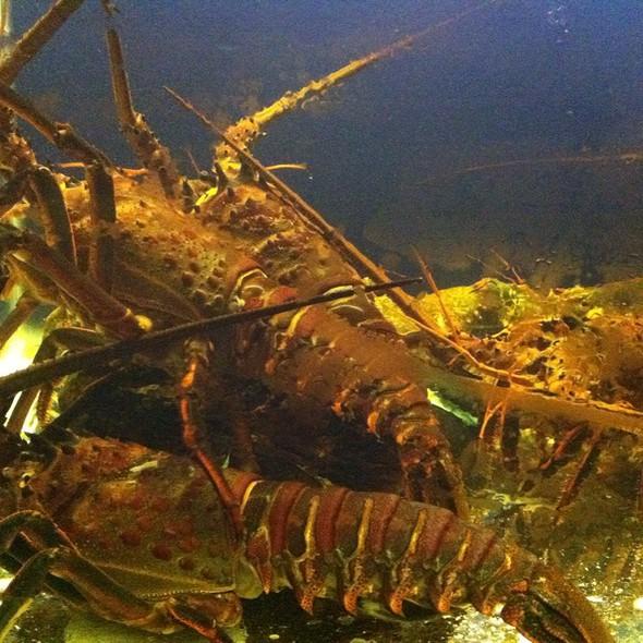 Australian Crustaceans (Lobster) @ Marina Seafood Cuisine by Ngoc Suong