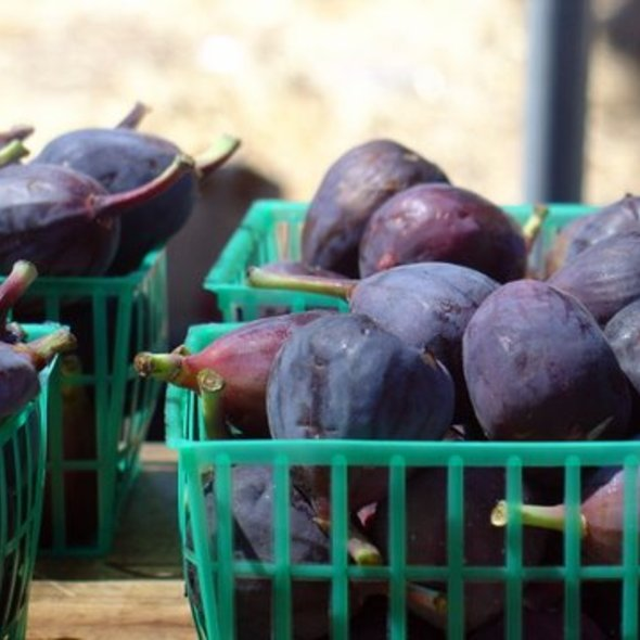 Black Mission Figs @ Alemany Farmers' Market