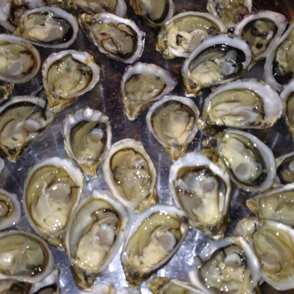 Shigoku Oysters Tonight, Simply Some Of The Best Oysters On Earth