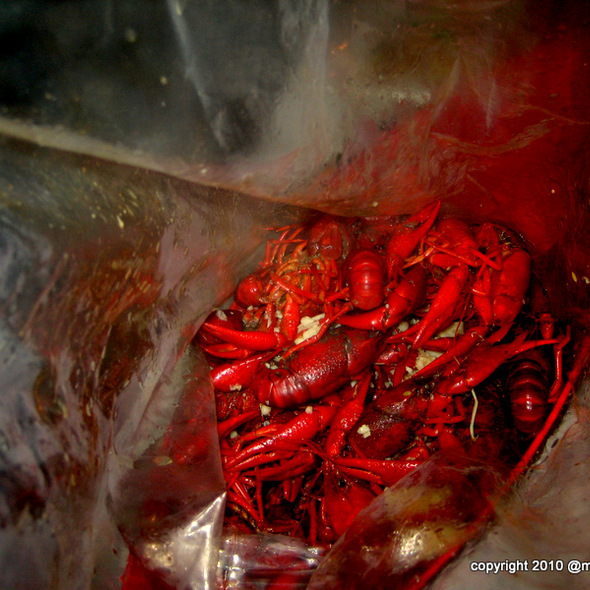 Cajun boiled crawfish @ Crawfishaholic