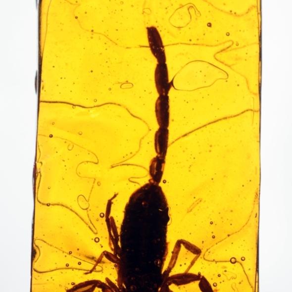 bug sucker @ Reyna Foods