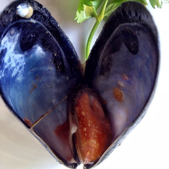 Steamed Mussels - Brockton Villa, San Diego, CA