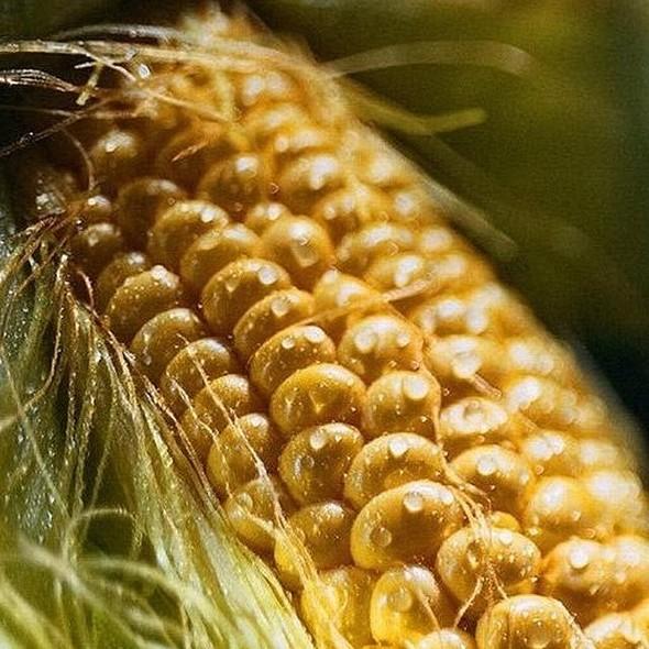 Corn On The Cob @ No Restraunt