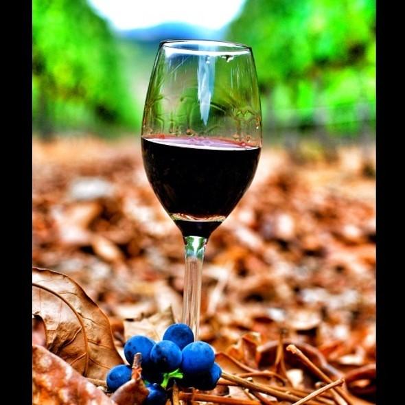 Port Wine @ Alto Wine Estate