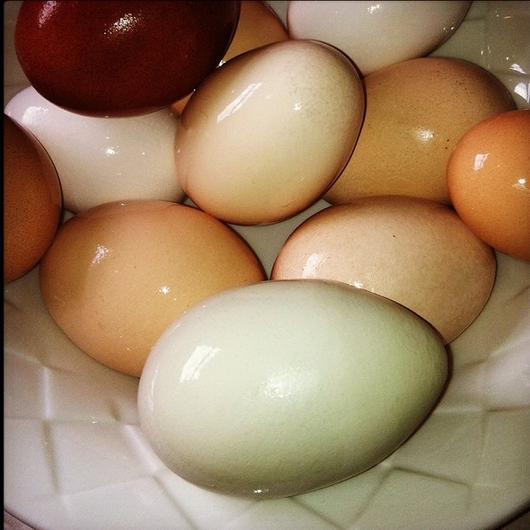Eggs @ Bobo Home
