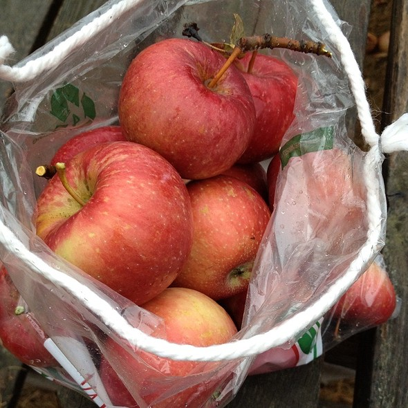 Fresh Picked Apples @ Aamodt's Apple Farm