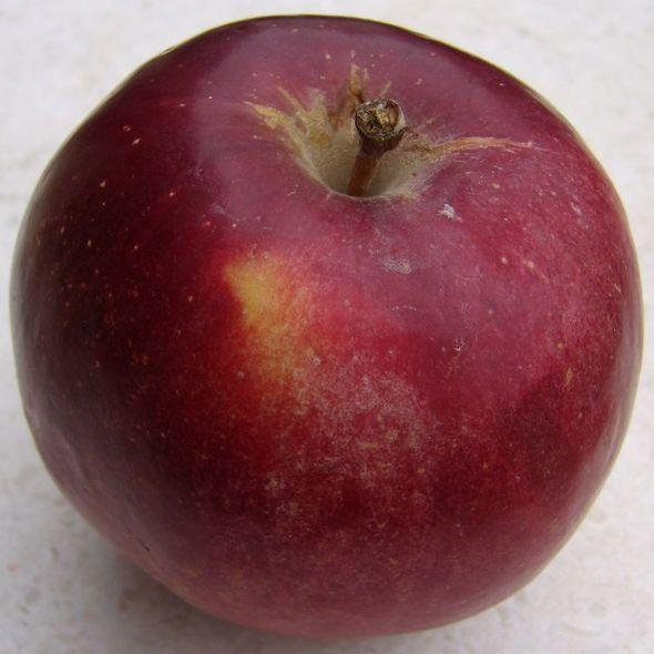 red delicious apple @ mercato del sabato