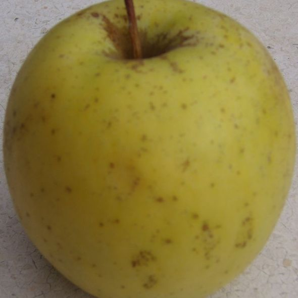Golden delicious apple @ mercato del sabato