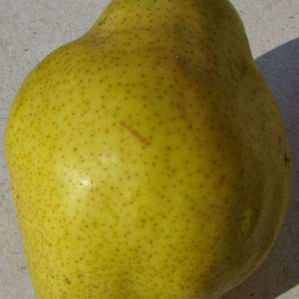 Williams pear @ mercato del sabato