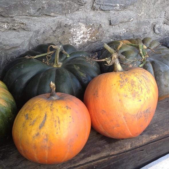 Pumpkins @ Chiara's Home