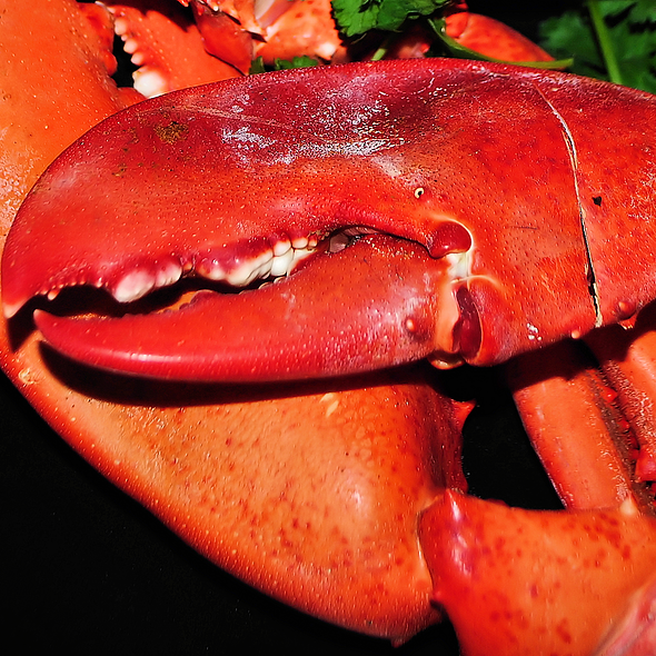 Lobster Claws @ Home
