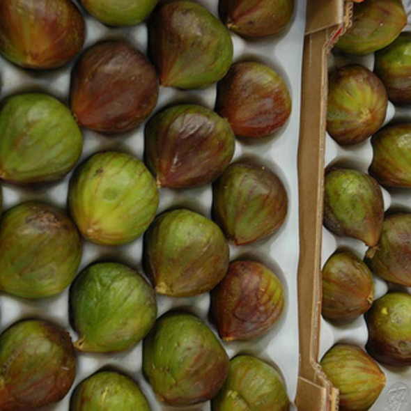 figs @ Marqt