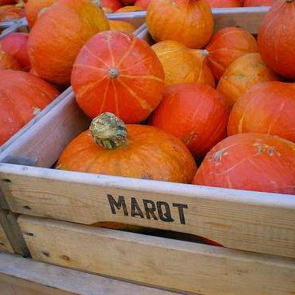 Pumpkins @ Marqt