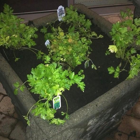 Fine Herbs - Bistro Nolah, Dollard-Des-Ormeaux, QC