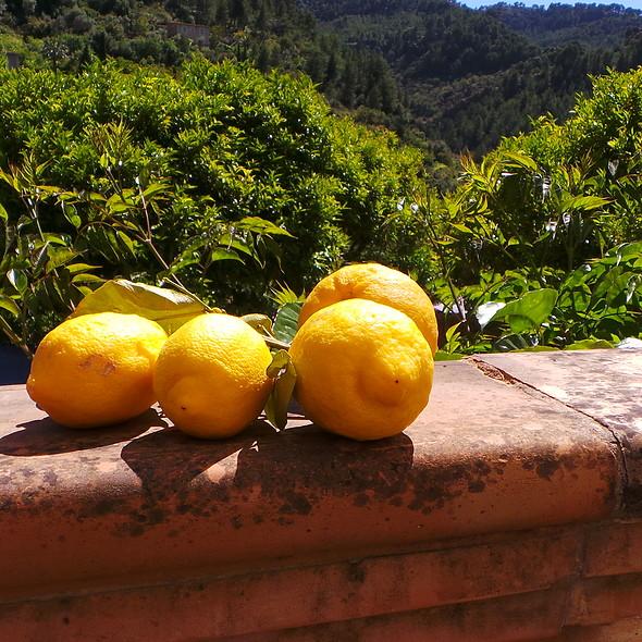 Lemons @ Es Raco d'es Teix