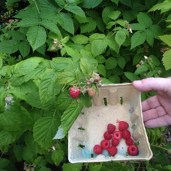 Rasberries @ Home