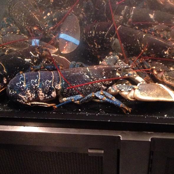 blue lobster @ L20