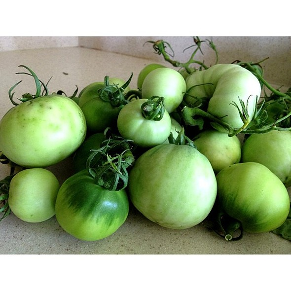 Green tomatoes will slowly turn red in a week or two. How cool is that...sit in a basket or on a window sill. I keep hearing fried green tomatoes taste yummy? YURP.....I am in love with food, n . @ Dee's Kitchen