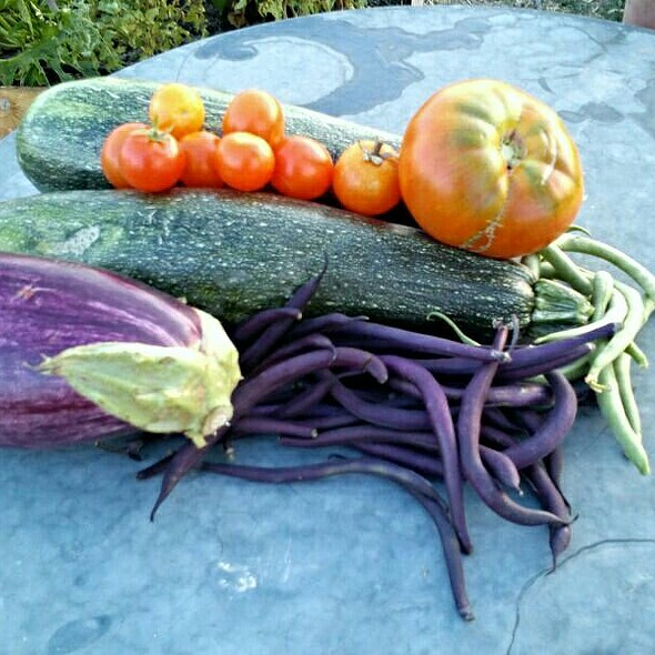 Fresh Vegetables @ My bro's vegetables