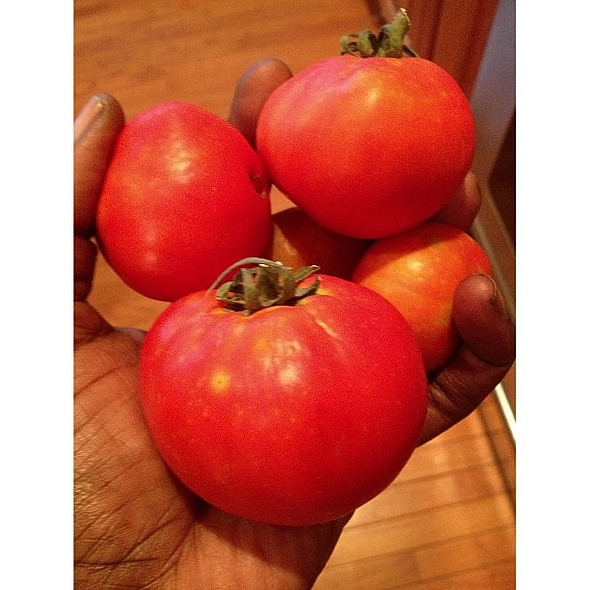 peeps. Remember those green tomatoes. The round green fruit are turning red on the window sill. A few made the refrigerator n a few did not....the tasted absolutely divine. During my sleeping throughout the night. My brain would not sleep. My thoughts abo @ Sow a Seed
