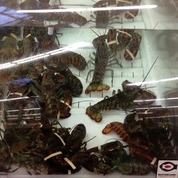 Live Lobster Tank @ Meijers