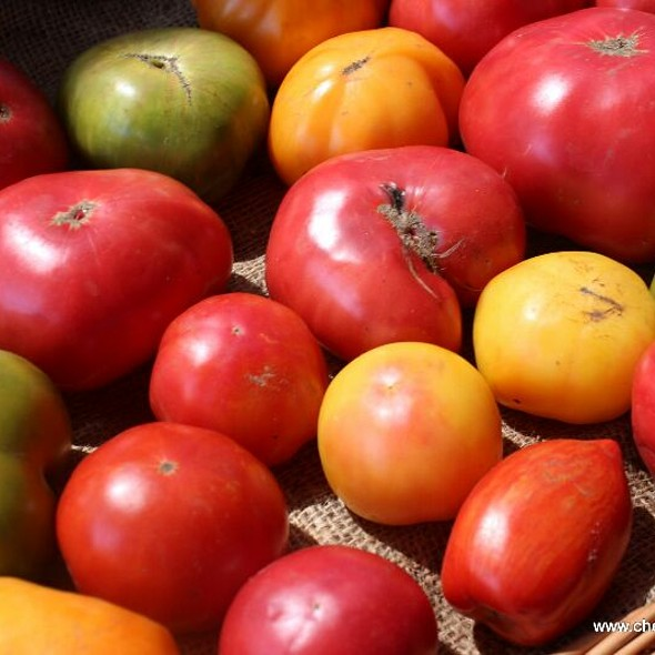 Tomatoes At The Farm  @ Balsam Farms