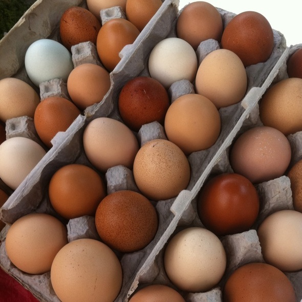 Ryals Yard Eggs @ Crescent City Farmer's Market
