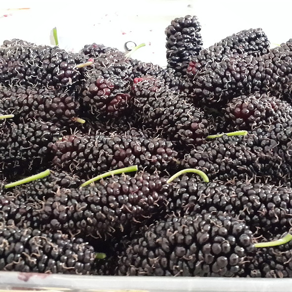 Black Mulberry @ My home Ankara