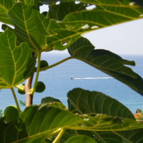 Figs And Sea @ Intavolata Lido