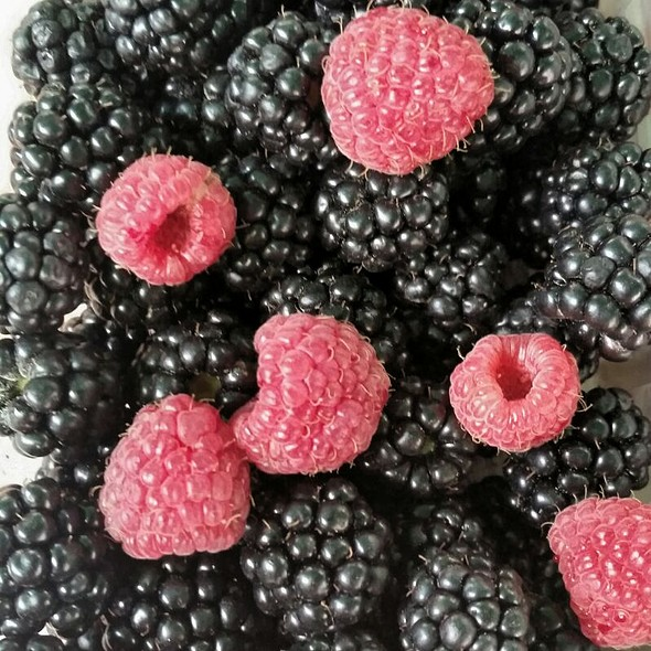 Berries  @ Bursa