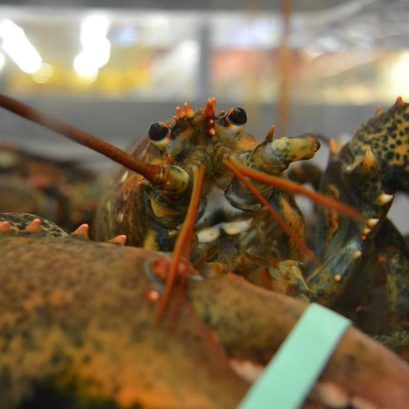 Lobster @ Winn Dixie