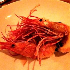 Tempora Shrimps