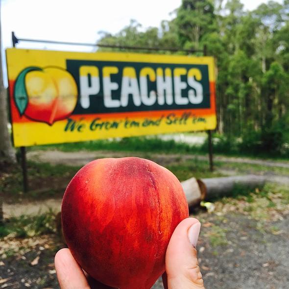 Yellow Peaches @ Fresh Peaches