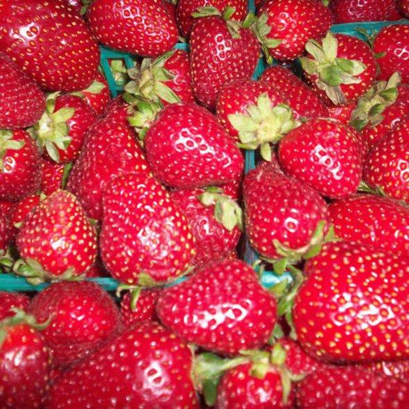 Fresh Strawberries @ CUT