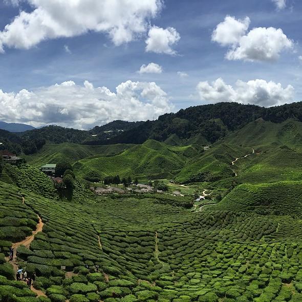 Tea @ Bharat Cameron Valley Tea House