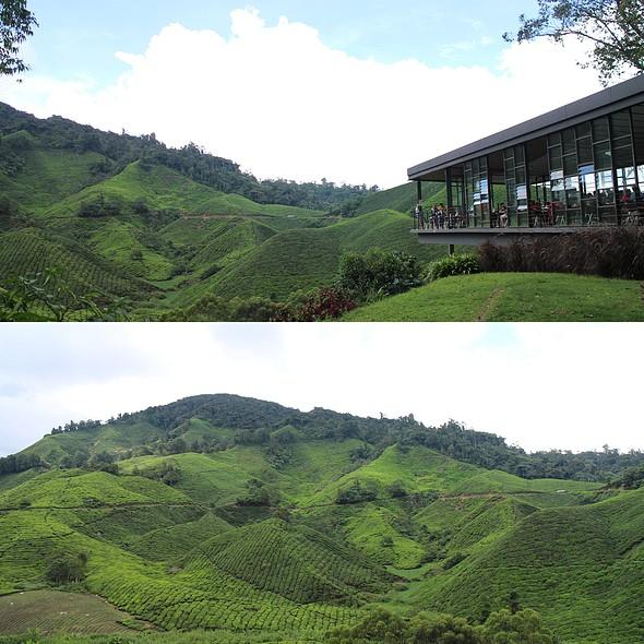 Tea @ Sungai Palas Boh Tea Cafe