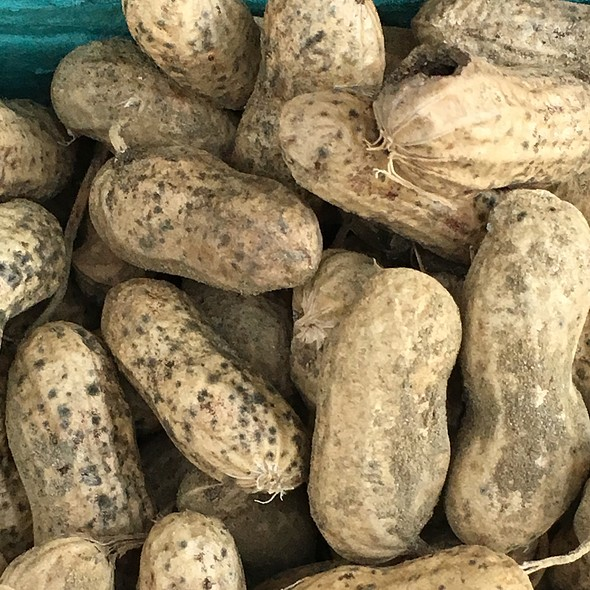 Fresh Peanuts @ CARROLL GARDENS GREENMARKET