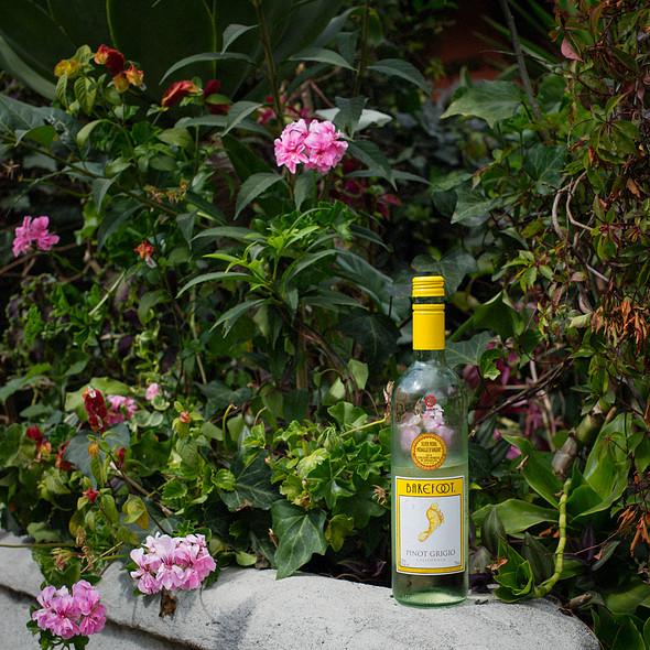 Barefoot California Pinot Grigio @ Villa Strelitzia