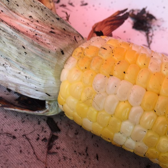 Corn on the Cobb @ The Place Restaurant