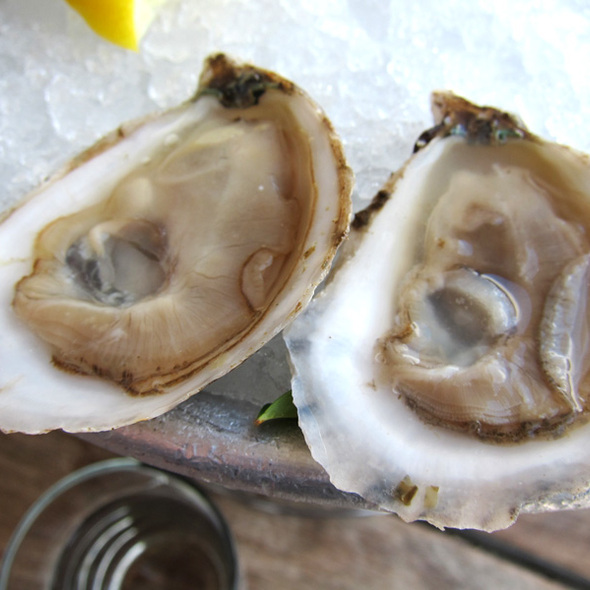 Sweetwater Oysters