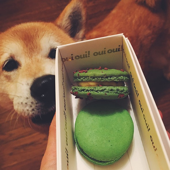 Pistachio & Green Tea Macaron