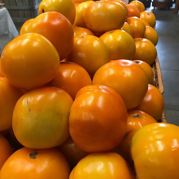 Golden Tomatoes