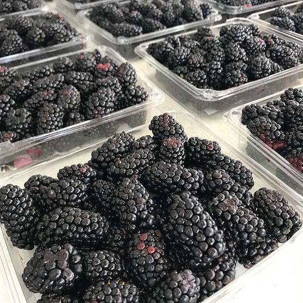 Blackberries @ Szalay's Sweet Corn Farm