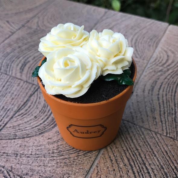 Jasmine Flower Pot Cake