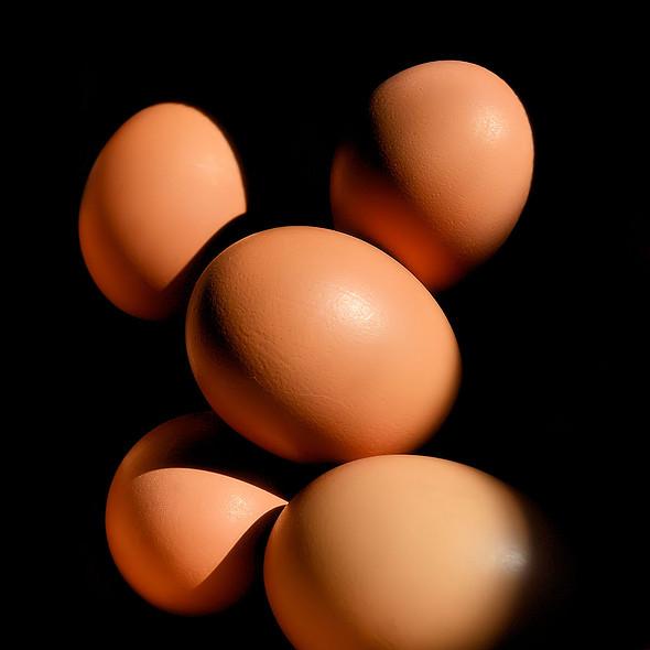 Brown Eggs @ Wolfpaw Studios