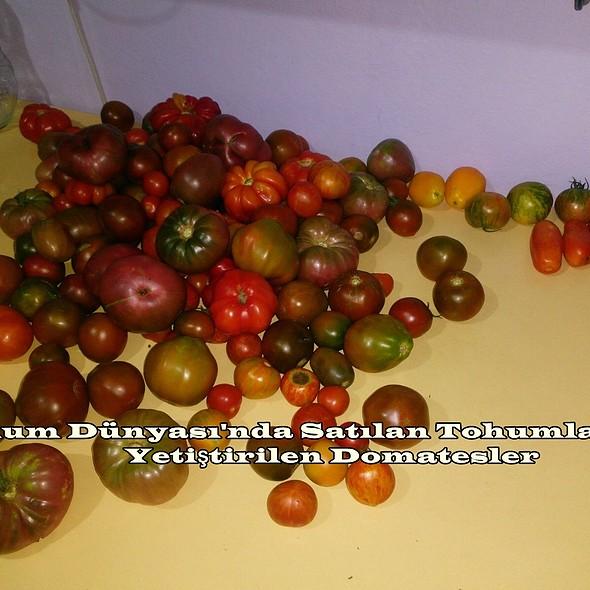 Bu sene yetiştirdiğimiz domatesler