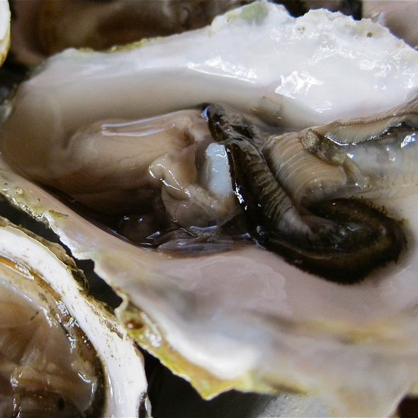 1 of 48 Point Rayes Oysters @ District Wine Bar SF