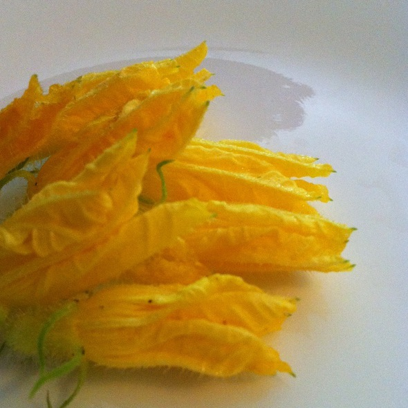 Squash Blossoms @ CUT
