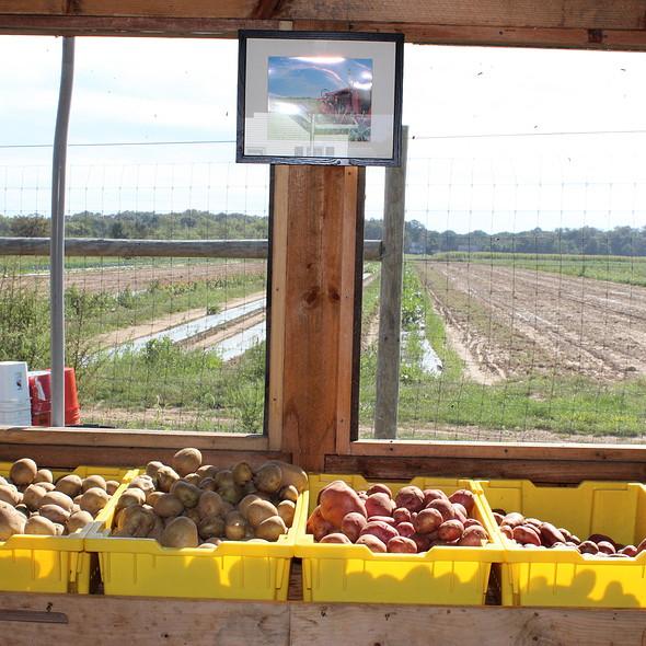 Potatoes at EECO Farm @ The Grill On Pantigo